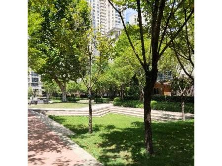 美的林城 全新3房 采光好 视野阔 观景房 可更名 地铁旁